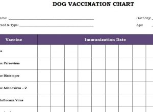 dog vaccination chart template haven. Black Bedroom Furniture Sets. Home Design Ideas