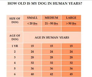 How Old Is My Dog in Human Years